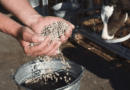 Global Cattle Feed Market is expected to Reach $78.3 Billion by 2027, Says Allied Market Research